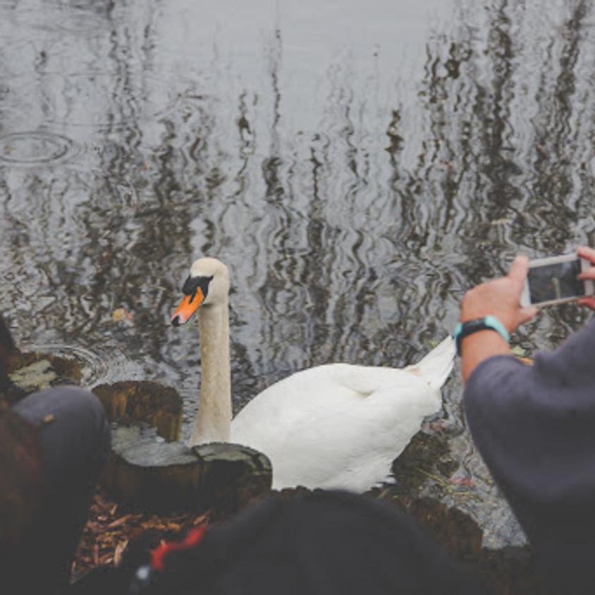 Fishbourne> Mill pond> Harbour Walk