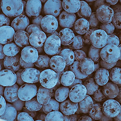 blueberry option 1.jpg