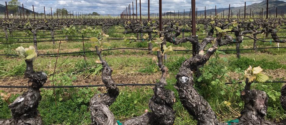 415 Wine Blog is LIVE!