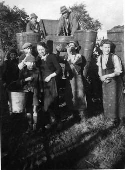 Vendanges dans les années 50