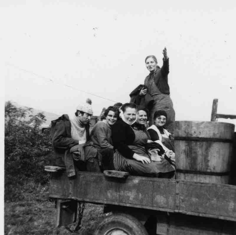 Photo d'archive : les vendangeurs