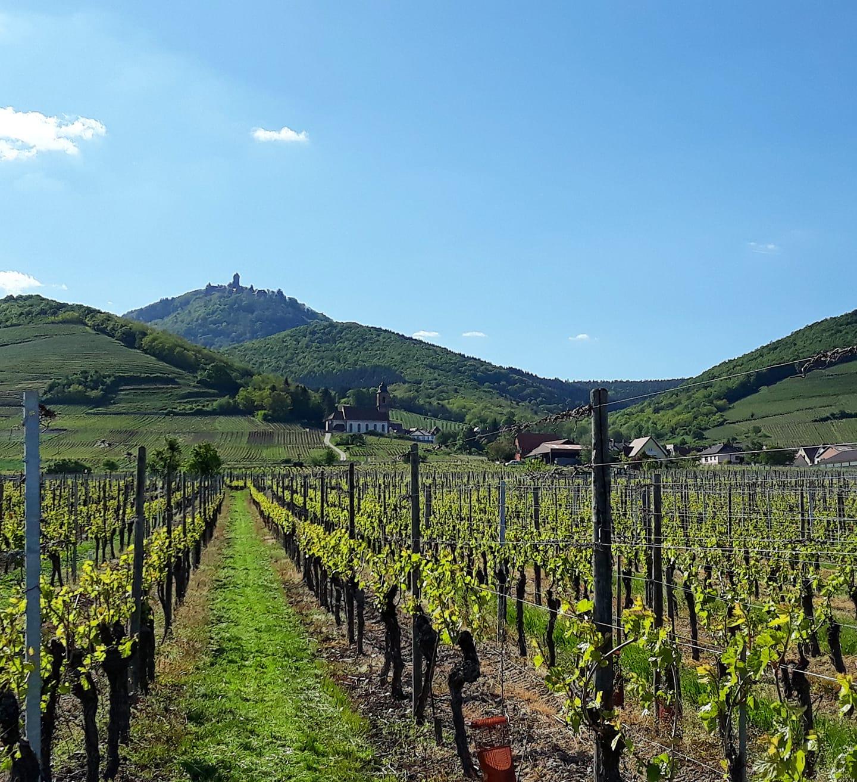 Vue sur le château depuis les vignes