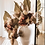 Thumbnail: Bespoke Dried Flower Arrangements