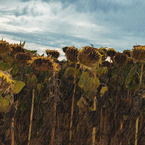 rainflowers Dordogne