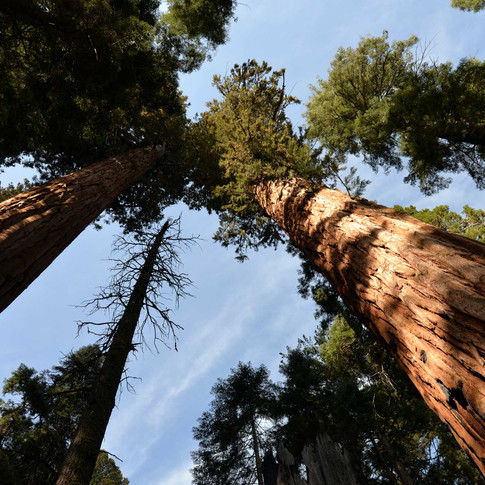 Sequoia park California USA