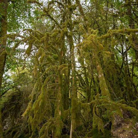 Mos Forrest Dordogne