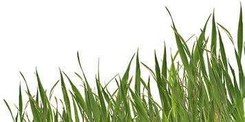 grass_bg.jpg