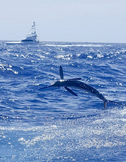 Catch White Marlin Punta Cana