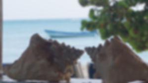 Caracoles en la Isla Saona