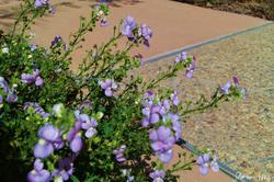 purp flowers