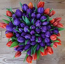 Duet Tulips