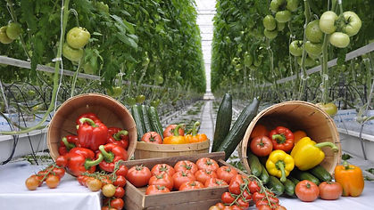 Display of greenhouse vegetables