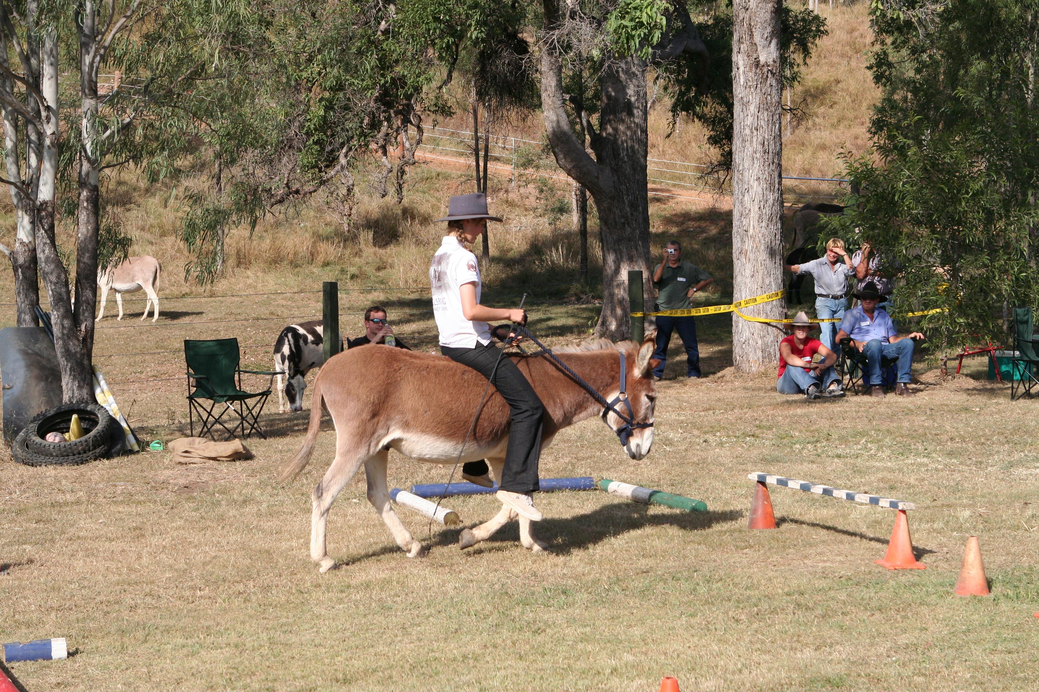 Donkey workshop Queensland
