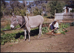 Gardening with Brolga