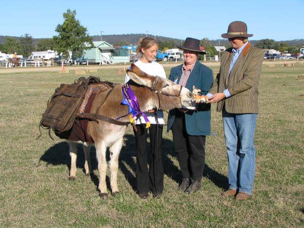 Henry Champion working donkey