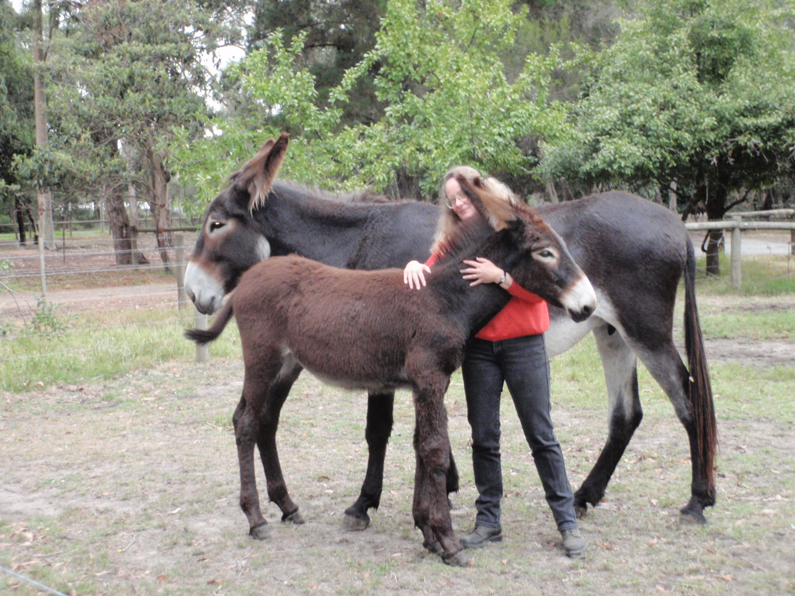 Diamond & Foal Magic & Leanne Davey