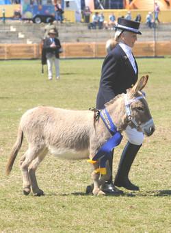 Margaret Lockyear & Miniature donkey