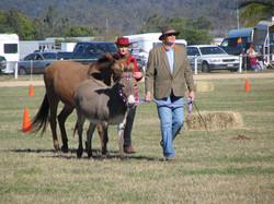 Sweety, small donkey & Mel, mule