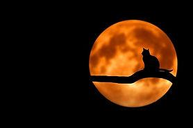 Chat et lune dans les rêves.jpg