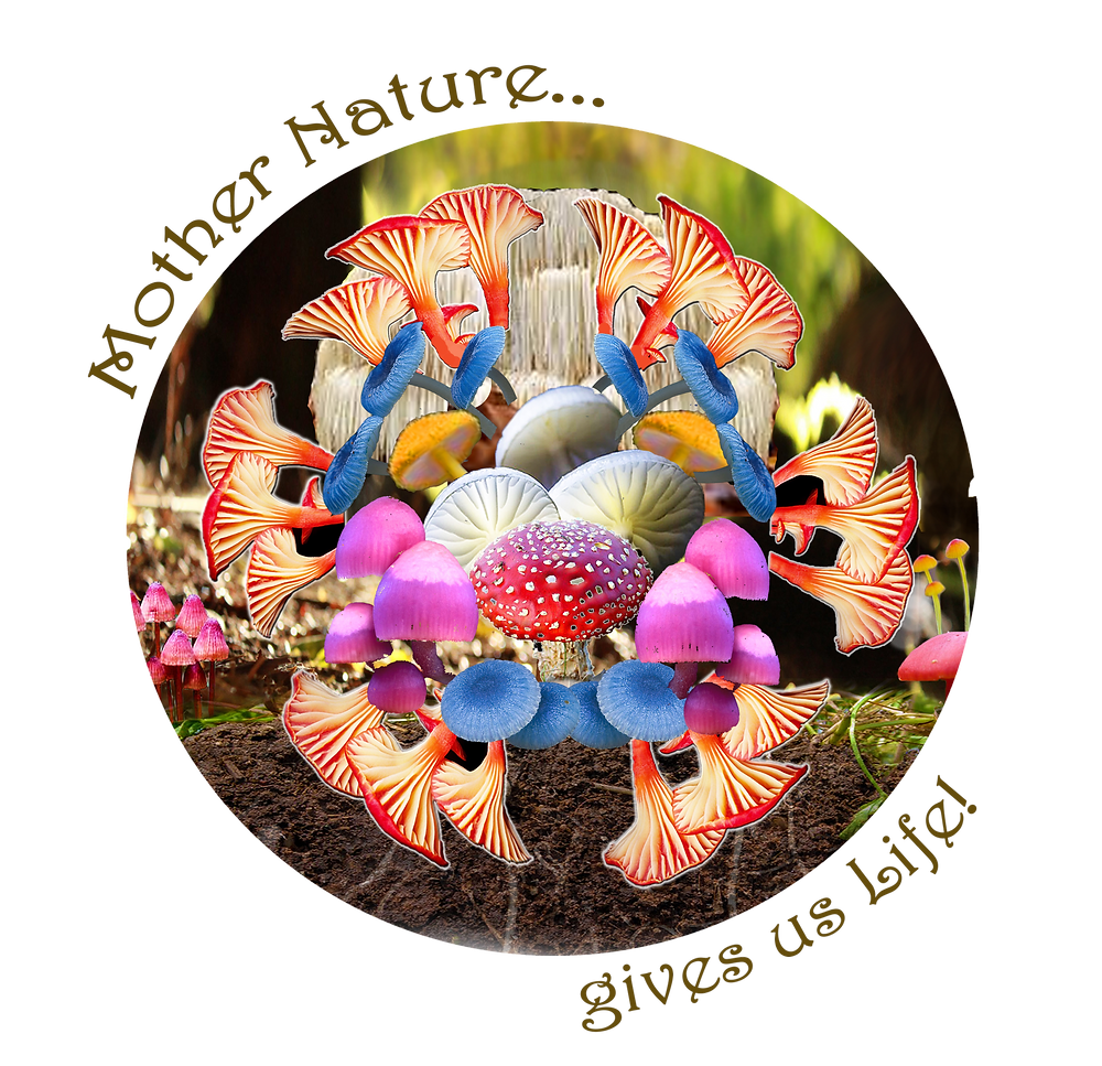 A glorious collection of Mushroom and Fungi in a Mandala
