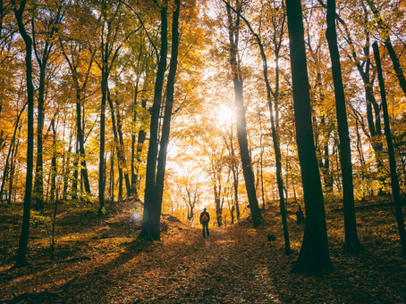 5 Reasons To Get Out Into Nature This Fall