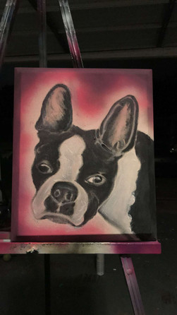 "Boston Terrier, Painting, Oils, Hand streched Canvass, 14""x18"", Frankie Bonze, House Of Pain, 30 Holiday Rambler, Byram, Mississippi, 39272"