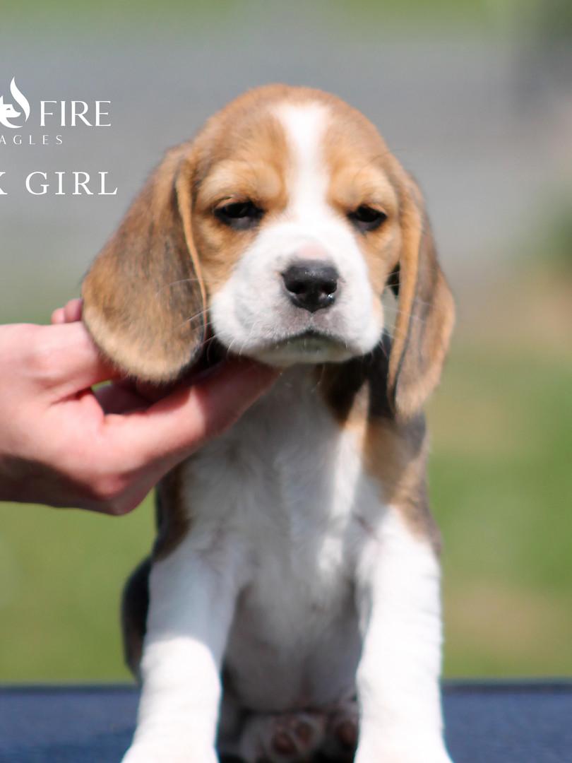 6 Week Old Pink Girl