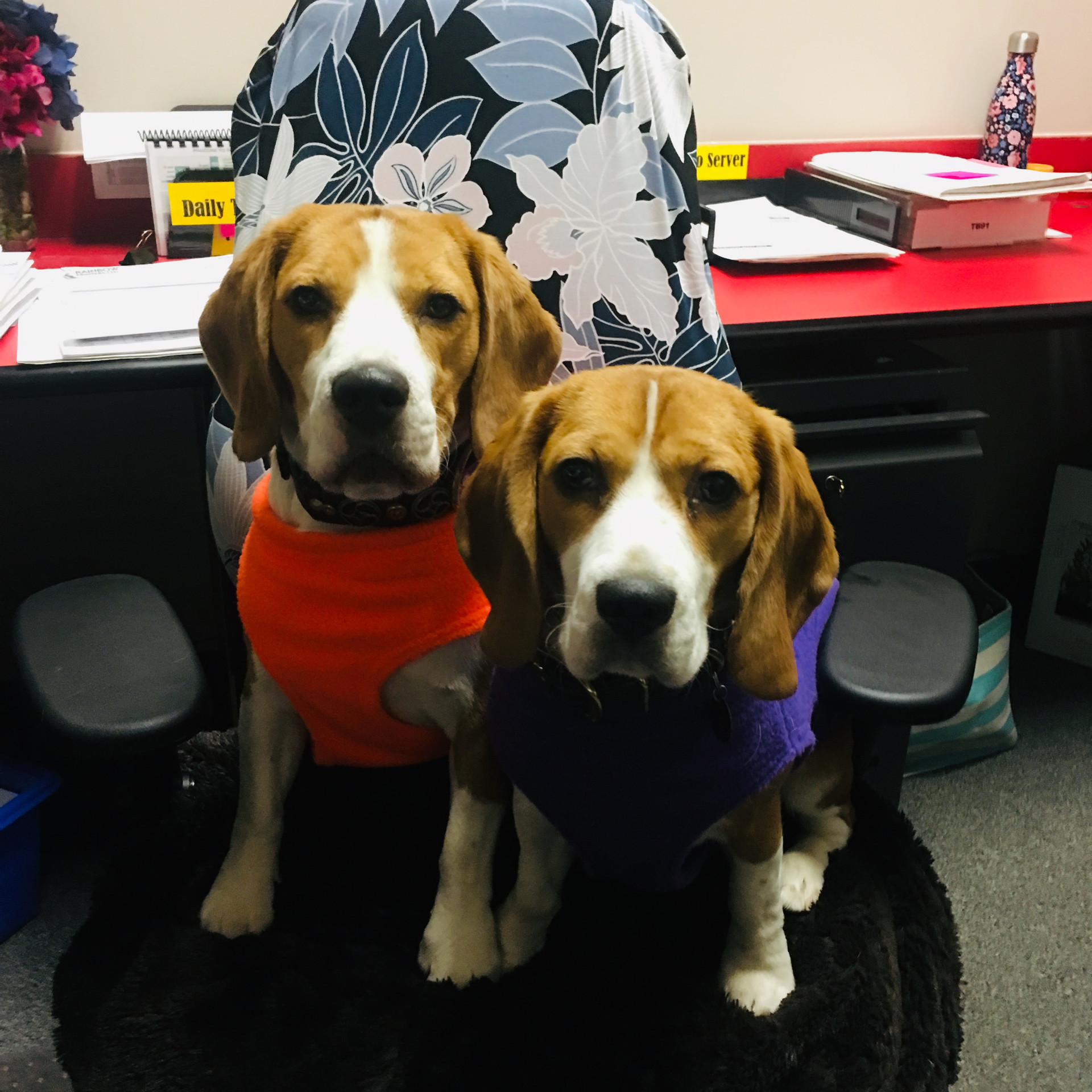 Fox & Clover at the office