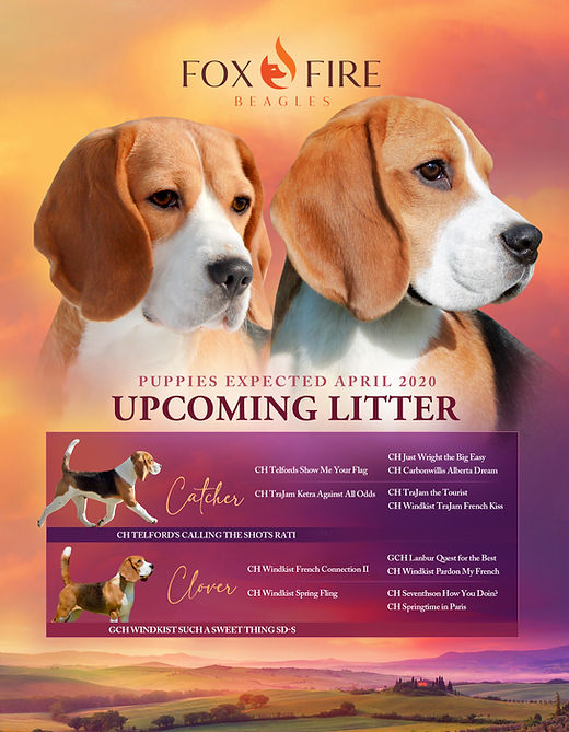Litter Announcement Spring 2020