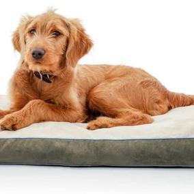 40 x 26 Soft Shredded Memory Foam Dog Bed with Washable Cover