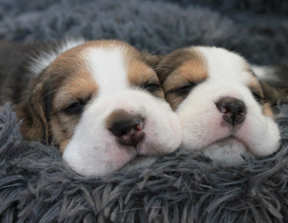 Snuggle Partners