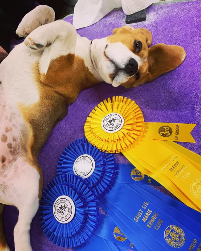 Sault Ste Marie Kennel Club Group 1