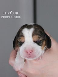 1 Week Old Purple Girl