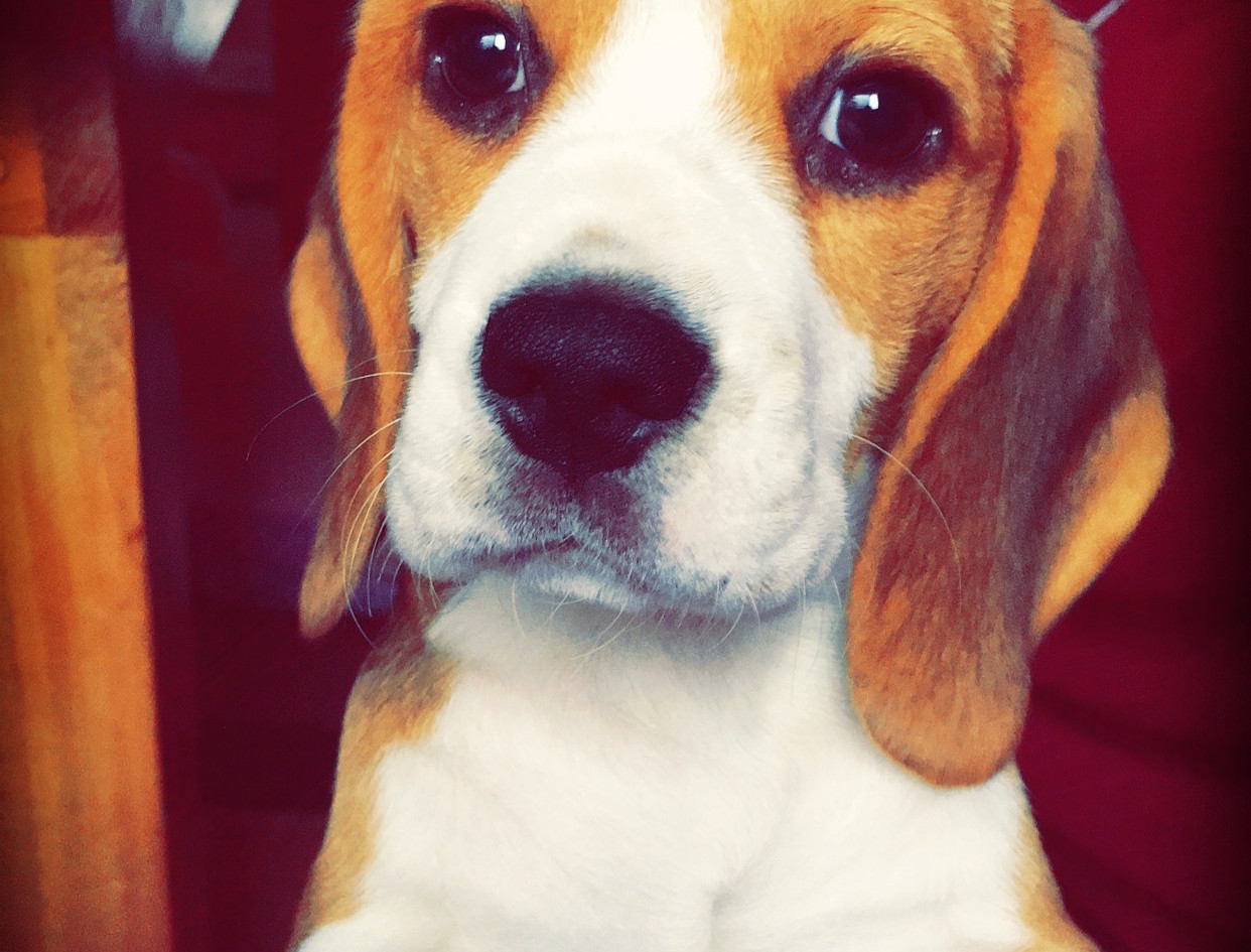 Clover as a Puppy