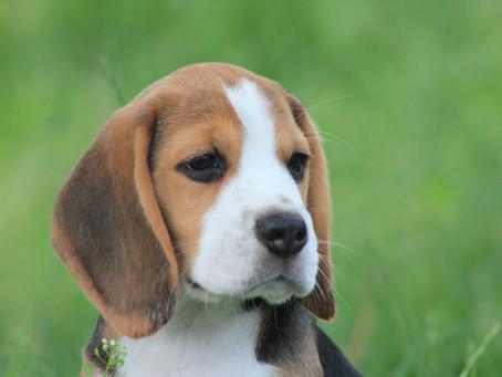 To Puppy Buyers Near & Far