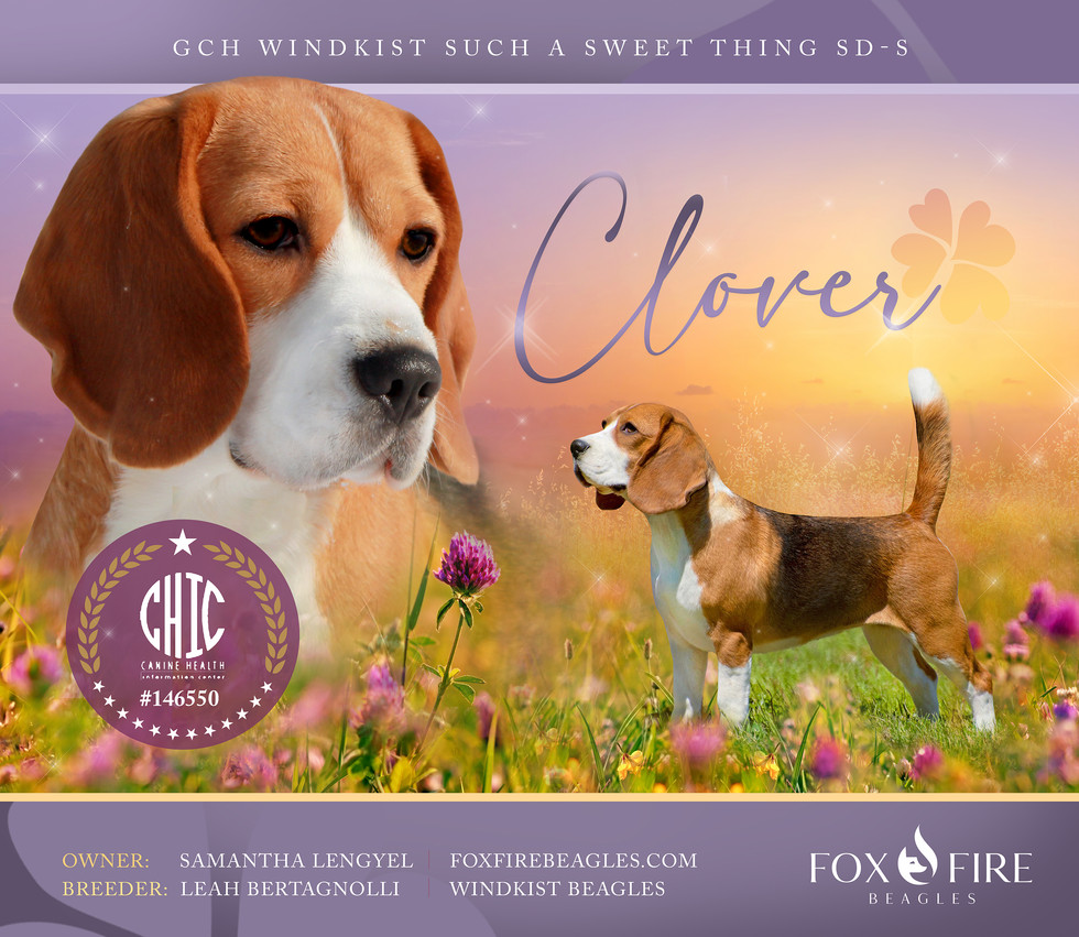 Clover CHIC Tested
