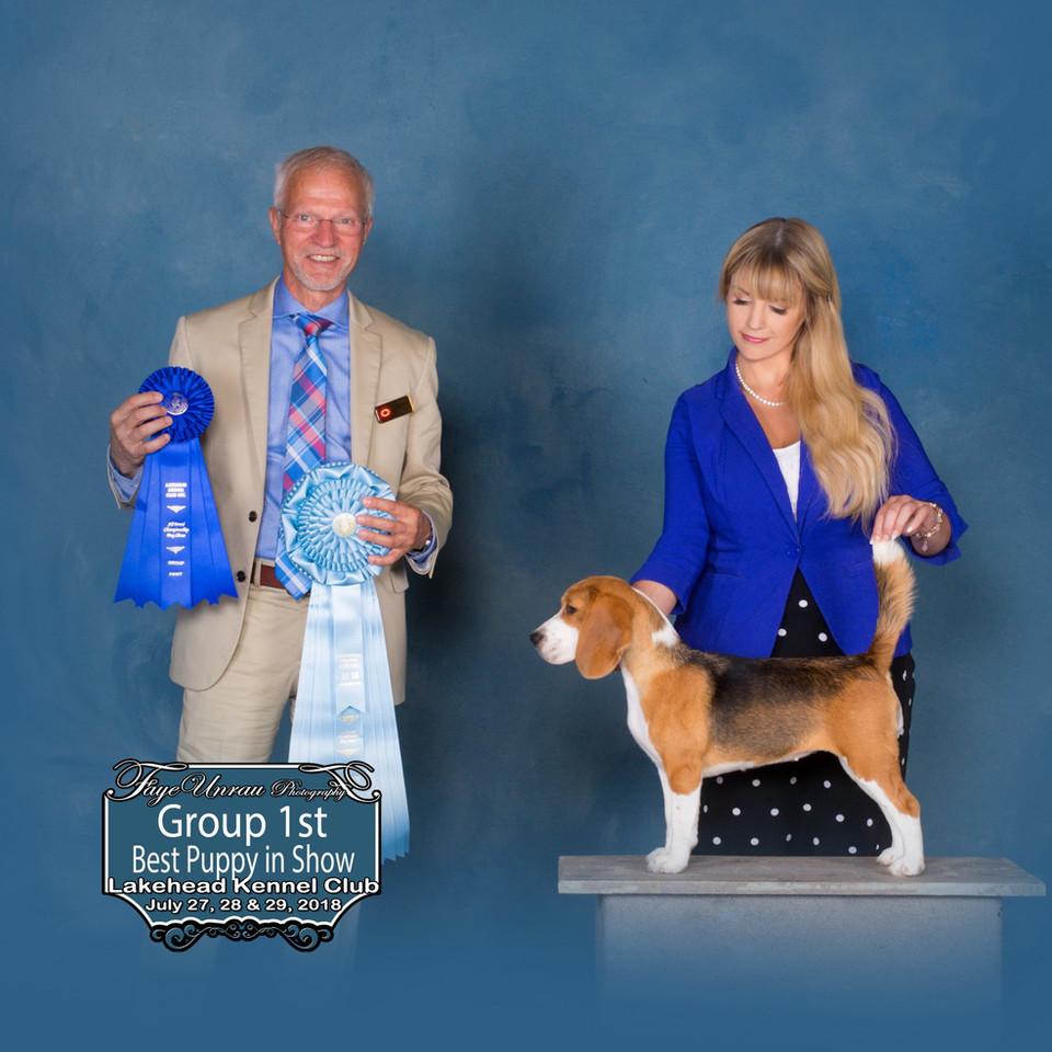 Group 1 & Best Puppy in Show