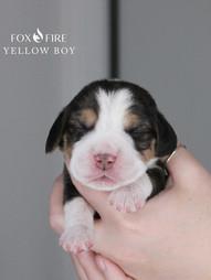 1 Week Old Yellow Boy