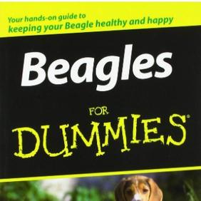 Beagles for Dummies - Susan McCullough