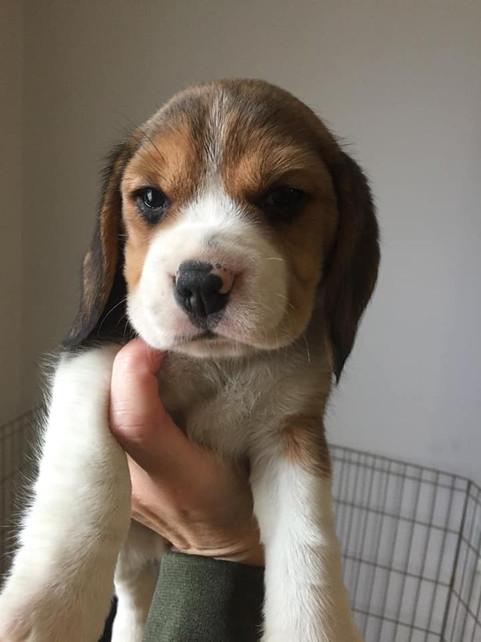 Love as a Puppy