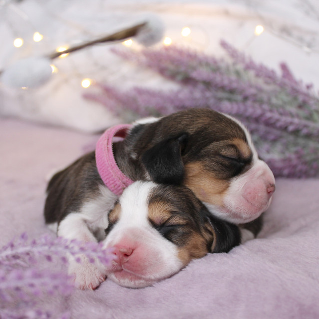 Two young female Puppies