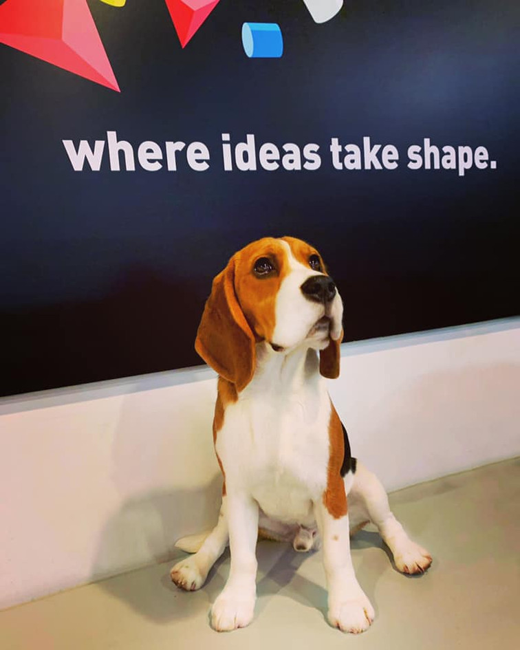 Male Beagle Catcher At the Office