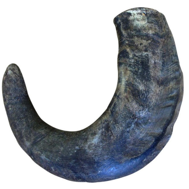 Water Buffalo Horn Treat Large