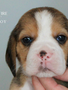 4 Week Old Red Boy
