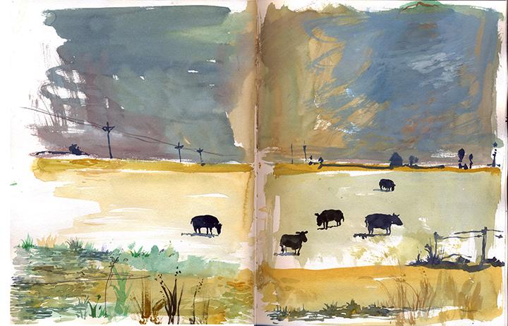 cows iowa