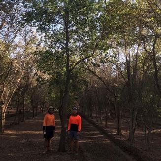 INDIAN SANDALWOOD PLANTATIONS