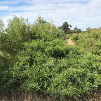 SOUTHWEST REVEGETATION