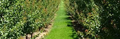 orchard.jpeg