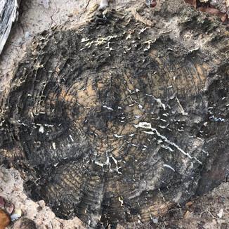 ANCIENT MOZAMBIQUE RELICS