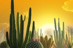 CactusMayImage2014Web.jpg